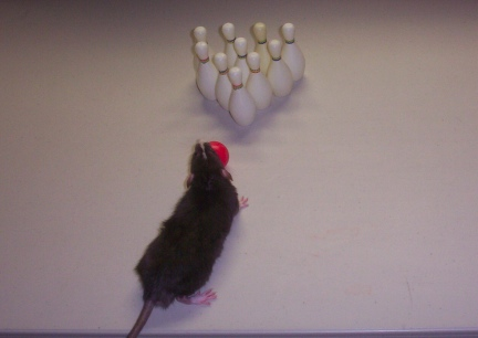 Rat Bowling Little Mac First Lesson
