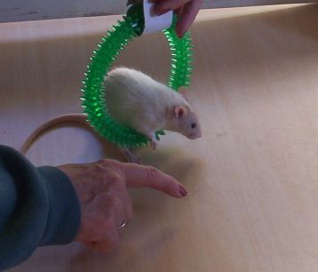 Nineveh Working The Hoop