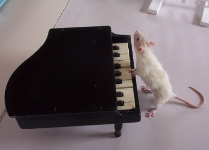 Nineveh Playing The Piano