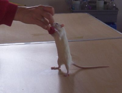 Nineveh Learning To Sit Up