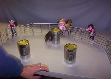 Little Mac Rodeo Debute