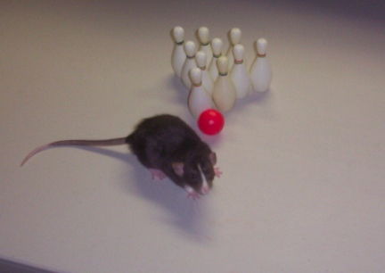 Rat Bowling Little Mac First Lesson 2